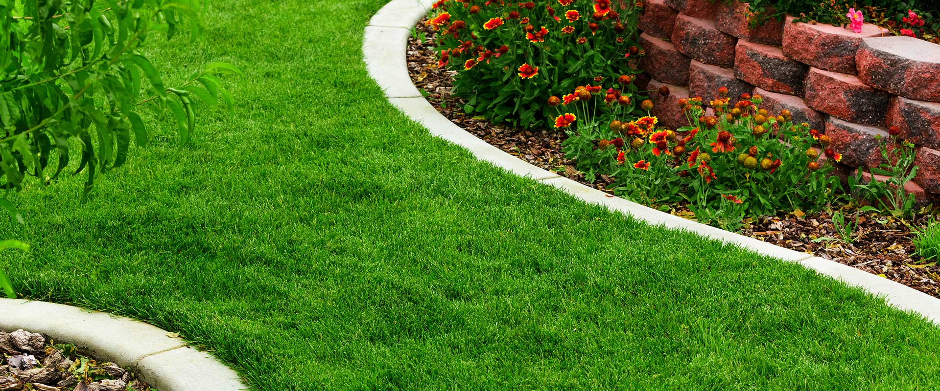 Do You Want Your Lawn Care To Thrive?