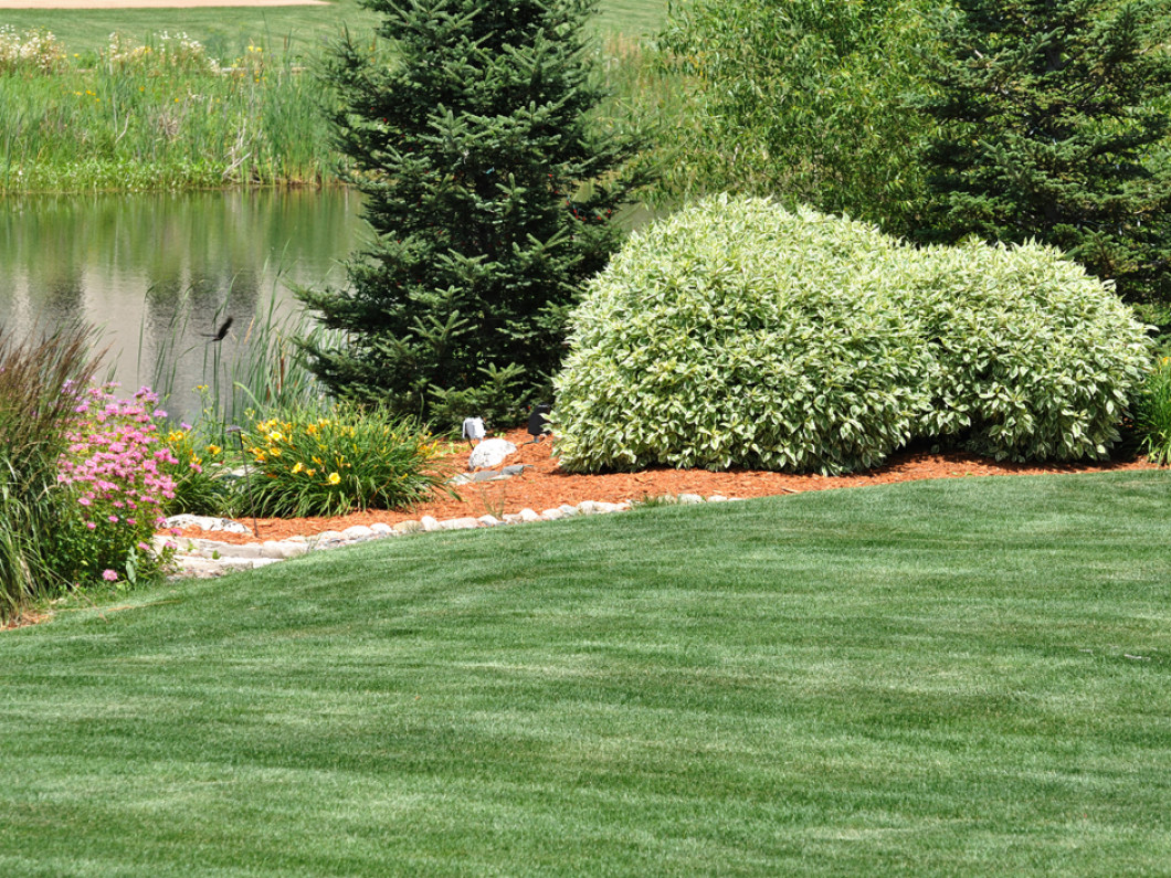 Get the Gorgeous Yard You've Always Wanted